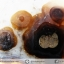 ▽เดนไดทริก อาเกต Dendritic Agateขัดมันจากมาดากัสการ์ (36g) thumbnail 3