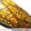 พลอยแอมโมไลต์ (Ammolite) อัญมณีโลกล้านปีสุดหายาก (3.07ct.) thumbnail 10