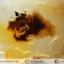 ▽เดนไดทริก อาเกต Dendritic Agateขัดมันจากมาดากัสการ์ (79g) thumbnail 6