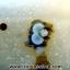 เดนไดทริก อาเกต Dendritic Agate ขนาดใหญ่ขัดมันจากมาดากัสการ์ (368g) thumbnail 6