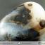 เดนไดทริก อาเกต Dendritic Agateขัดมันจากมาดากัสการ์ (45g) thumbnail 5