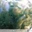 ▽มอสอาเกต (Moss gate) ขัดมัน (20g) thumbnail 3
