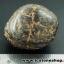 ▽แร่ภูเขาควาย หินมงคลจากภูเขาควาย (22g) thumbnail 3