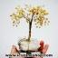 ต้นไม้มงคล หินหยกน้ำผึ้ง+ควอตซ์ ใช้เสริมฮวงจุ้ย โต๊ะทำงาน (527g) thumbnail 12