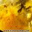 ▽=โปรโมชั่น= พลอยไหมทอง Golden Rutilated Quartz (59.50ct.) thumbnail 8