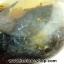 เดนไดทริก อาเกต Dendritic Agateขัดมันจากมาดากัสการ์ (52g) thumbnail 8