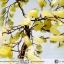 ต้นไม้มงคล ต้นไม้ หินเซอร์เพนไทน์ -ซิทริน ใช้เสริมฮวงจุ้ย โต๊ะทำงาน (300g) thumbnail 6