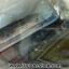 ▽เดนไดทริก อาเกต Dendritic Agateขัดมันจากมาดากัสการ์ (38g) thumbnail 7