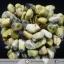 ▽ต้นไม้มงคล หินเซอร์เพนไทน์ SERPENTINE-ฐานควอตซ์ ใช้เสริมฮวงจุ้ย โต๊ะทำงาน (188g) thumbnail 6