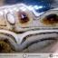 ▽อาเกตมาดากัสการ์ (Madagascar Agate) ขัดมัน (155g) thumbnail 9