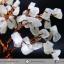 ต้นไม้มงคล หินมูนสโตน -ควอตซ์ ใช้เสริมฮวงจุ้ย โต๊ะทำงาน (373g) thumbnail 10