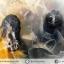 เดนไดทริก อาเกต Dendritic Agateขัดมันจากมาดากัสการ์ (46g) thumbnail 2