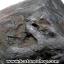 อกธรณี หรือ แร่ดูดทรัพย์ ขนาดใหญ่(7.75 Kg) thumbnail 4