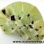 ▽พรีไนท์ (Prehnite)ธรรมชาติ ประเทศมาลี (20.4g) thumbnail 3