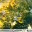 มอสอาเกต (Moss gate) ขัดมัน (18g) thumbnail 5