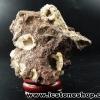 ชาบาไซท์ (chabazite) New Mexico ตั้งโต๊ะ ฐานไม้ (101g)