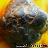 หินเหล็ก จากประเทศลาว(46g)