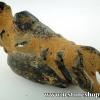 ฟอสซิลลอบสเตอร์ Fossil Mud lobster (59g)