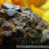 หินเหล็ก จากประเทศลาว(35g)