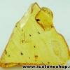 โคปอลธรรมชาติ (COPAL) อำพันอายุน้อยธรรมชาติมีแมลงภายในจากรัสเซีย (24.5ct.)