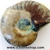 ฟอสซิล แอมโมไนต์เหลือบรุ้ง(Ammonite) (4g)