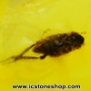 อำพันโดมินิกัน มีแมลงภายใน Dominican Blue Amber ของแท้(7.13ct)