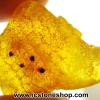 อำพัน บอลติก Genuine Baltic Amber (8.15ct)