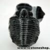 ▽ฟอสซิลไทรโลไบต์(Trilobite) (1.6g)