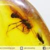 อำพันโดมินิกัน กลุ่มแมลงภายในจำนวนมาก Dominican Blue Amber ของแท้(50.2ct)