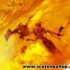 ▽โคปอลธรรมชาติ (COPAL) อำพันอายุน้อย ธรรมชาติมีแมลงภายในจากรัสเซีย (25.5ct.)
