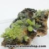 ▽ไพโรมอร์ไฟต์ Green Pyromorphite (21g)