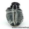 ▽ฟอสซิลไทรโลไบต์(Trilobite) (1.9g)