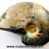 ▽ฟอสซิล แอมโมไนต์เหลือบรุ้ง(Ammonite) (2.7g)