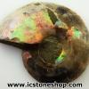 ▽ฟอสซิล แอมโมไนต์เหลือบรุ้ง(Ammonite) A+ ผ่าครึ่ง(11g)