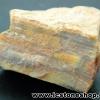 ▽ไม้กลายเป็นหิน Petrified Wood (9.2g)