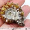 แอมโมไนท์เขาแพะ (Goat Horn Ammonite) จากมาดากัสการ์ (29g)