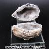 ▽อ๊อคโค่ จีโอด (Occo Geode)- (141g)