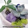 สวนหินตั้งโต๊ะ (Quartz, Lapis, Amethyst, Rose Quartz)