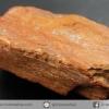 ไม้กลายเป็นหิน Petrified Wood (8.4g)