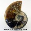 ▽ฟอสซิล แอมโมไนต์ลายเฟิร์นและเหลือบรุ้ง(Ammonite) (87g)