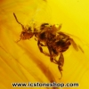 ▽อำพันโดมินิกัน มีแมลงภายใน Dominican Blue Amber ของแท้(13.55ct)