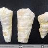 ฟอสซิลหอยทาก Mesalia จากเท็กซัส สหรัฐอเมริกา(2.5g)
