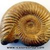 ▽ฟอสซิล (Ammonite) โมร็อกโค (118g)