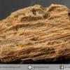 ไม้กลายเป็นหิน Petrified Wood (4.4g)