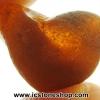 อำพัน บอลติก Genuine Baltic Amber (5.43ct)