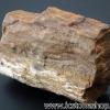 ▽ไม้กลายเป็นหิน Petrified Wood (26g)