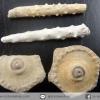 ฟอสซิล Echinoid plates and Spine Pennsylvanian จากเท็กซัส สหรัฐอเมริกา(1.6g)