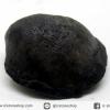 หอยโบราณเป็นหิน (คตหอย)จากประเทศลาว (19g)