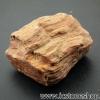 ▽ไม้กลายเป็นหิน Petrified Wood (13g)