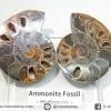 ฟอสซิล แอมโมไนต์ ผ่าครึ่งคู่ พร้อมฐานกระจก (Ammonite)(27g)